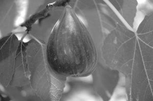 Hot Fruit Living In Yuma Arizona